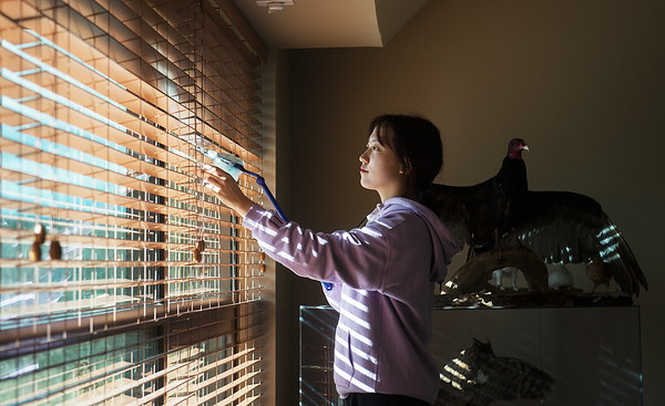 Globe/Roger Nomer<br /> Sung Ha Seo, a Missouri Southern senior from Seoul, South Korea, cleans blinds on Monday at the Wildcat Glades Conservation and Audubon Center as part of the Martin Luther King Jr. Day of Service.