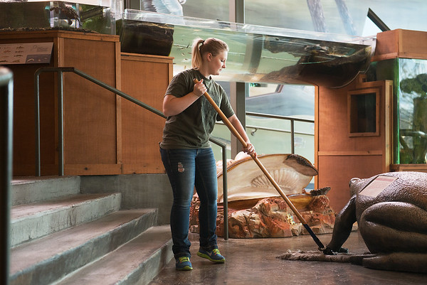 Globe/Roger Nomer<br /> Whitney Koch, who works in the admissions office at Missouri Southern, sweeps the floor on Monday at the Wildcat Glades Conservation and Audubon Center as part of the Martin Luther King Jr. Day of Service.