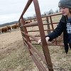 Katie Martin closes a cattle gate at her family's farm in Newton County on Thursday.<br /> Globe | Roger Nomer