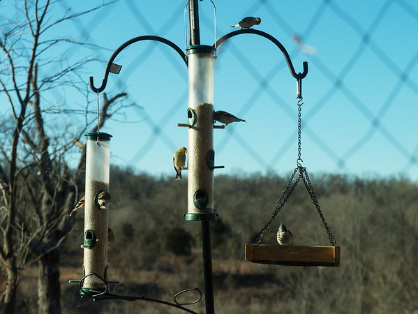Birds perch on a birdfeeder at the Shoal Creek Conservation Education Center on Saturday.<br /> Globe | Roger Nomer