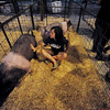 Globe/Roger Nomer<br /> Taylor Linder, 14, Carthage, waits with her pigs for weigh in at the pig barn at the Jasper County Youth Fair on Tuesday evening.