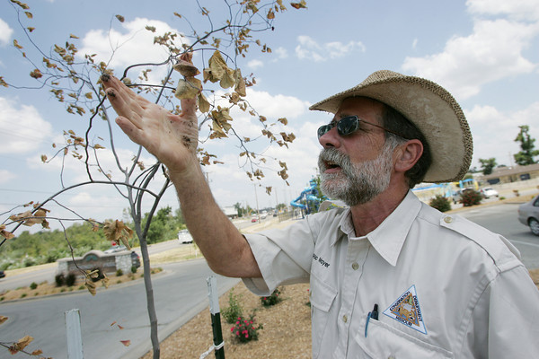 Globe/Roger Nomer<br /> Ric Mayer, community forestry recovery coordinator with the Missouri Department of Conservation, examines a browning tree at Cunningham Park on Monday.