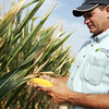 Globe/Roger Nomer<br /> Clint Fletcher checks the status of his cornfield near Carl Junction on Friday morning.