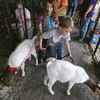 Globe/Roger Nomer<br /> Siblings Dorothy, 7, and Allen, 6, Smith, Fairview, wrangle their goats at the Newton County Fair on Wednesday.