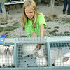 Globe/Roger Nomer<br /> Kaylee Talken removes her rabbits after judging at the Jasper County Youth Fair on Tuesday evening.