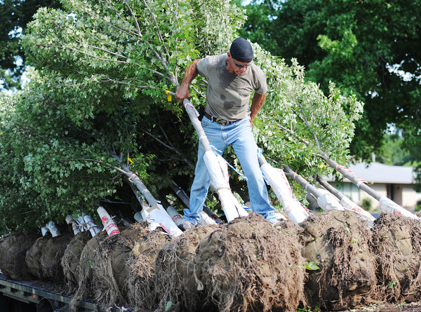 Globe/T. Rob Brown<br /> Ozark Nursery laborer John Shreve unloads 67 trees delivered to Campbell Parkway Tuesday morning, July 9, 2013. The full project includes a total of 1,530 native Missouri trees about 12 to 14 feet tall, including sycamores, birch, bur oak, red oak and a couple maple varieties.