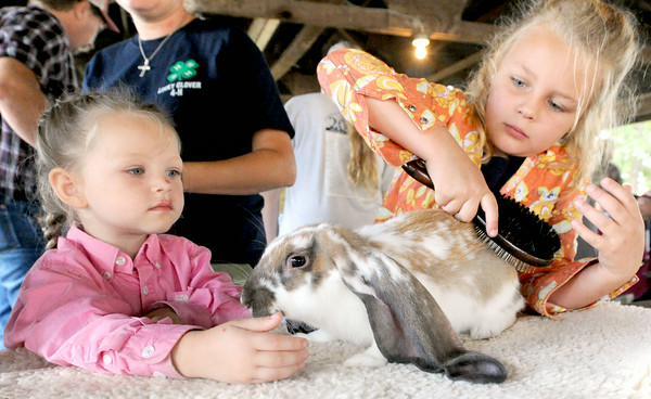 "Six-year-old Morgan Barber, 6, of Seneca, grooms ""Ears,"" her English Lop Reserve Grand Champion in the Pee Wee Division on Thursday at the Newton County Fair.<br /> Gloe 
