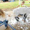 """Bailey Louden, 16, bathes her sheep, """"Molly,"""" as six-year-old Elizabeth Helm assists  on Thursday at the Newton County Fair.<br /> Globe 