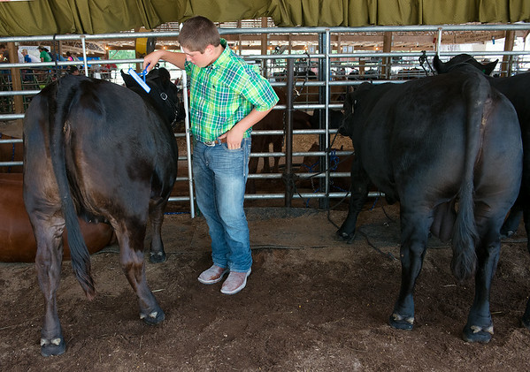 Globe/Roger Nomer<br /> Jonathan Kohley, 13, Jasper, takes time to groom his cows before judging at the Jasper County Fair on Friday.