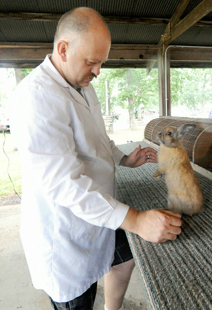 Lance Shonk, Sarcoxie, judges rabbits on Thursday at the Newton County Fair.<br /> Globe | Laurie Sisk