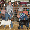 From the left: Seventeen-year-old Mikayla Lund, of Carthage FFA, and ten-year-old Abe Maples, of the Lincoln 4H Club, show their goats on Wednesday at the Jasper County Fair in Carthage.<br /> Globe | Laurie Sisk