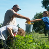Globe/Roger Nomer<br /> Abby West, 10, left, and Ella Holt, 12, help Master Gardener Dale Mermoud harvest vegetables on Monday at the Kids Community Garden in Webb City. The garden, located near the intersection of Aylor and Pennsylvania, will hold harvest training sessions with Master Gardeners every Monday morning, from 9 a.m. to 10 a.m., until school starts. The garden is open to the public.