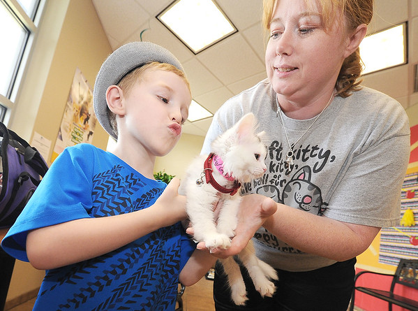 "Sarah Arnold, right, hands a newly adopted kitten, ""Harley Quinn"" to her 5-year-old son Lucas Arnold on Friday at the Joplin Humane Society.<br /> Globe 