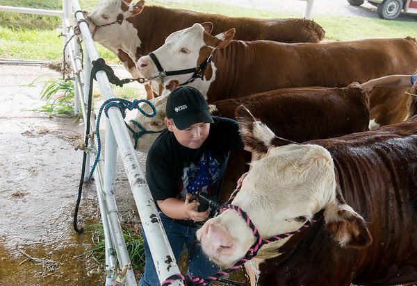 Globe/Roger Nomer<br /> Riley Gray, 10, Stella, washes his cows on Wednesday at the Newton County Fair.