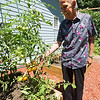 Korean War veteran Edwin Patron shows off tomatoes he helped caretaker Tom Jones grow near Verona. Patron lives with caretaker Jones and his wife, Jennifer Jones on their rural Verona farm as part of a VA program that matches veterans with caretakers.<br /> Globe | Laurie Sisk