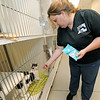 "Tianna Fisher, community outreach coordinator for the Joplin Humane Society, offers ""Penni"" a treat on Friday at the Joplin Humane Society.<br /> Globe 