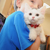 "Five-year-old Lucas Arnold holds his new adopted kitten, ""Harley Quinn"" on Friday at the Joplin Humane Society.<br /> Globe 