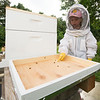 Six-year-old Lila Cade rids one of her hives of invasive beetles at her rural Carthage home on Wednesday night.<br /> Globe | Laurie Sisk