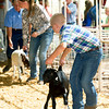 Ten-year-old Abe Maples, of the Lincoln 4H Club, leads his goat in for show on Wednesday at the Jasper County Fair in Carthage.<br /> Globe | Laurie Sisk