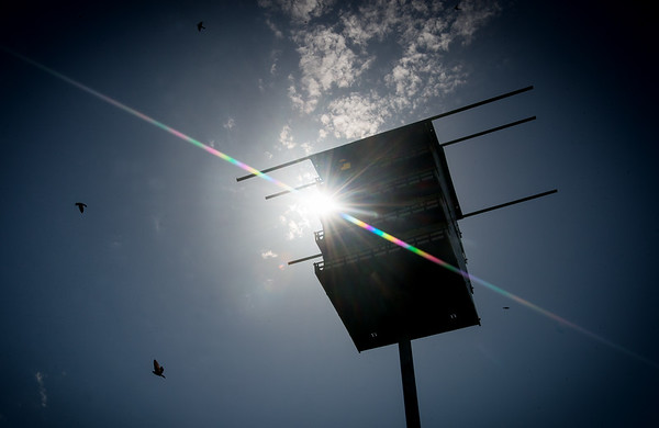 Globe/Roger Nomer<br /> Purple Martins circle bird houses in Neosho on Thursday.