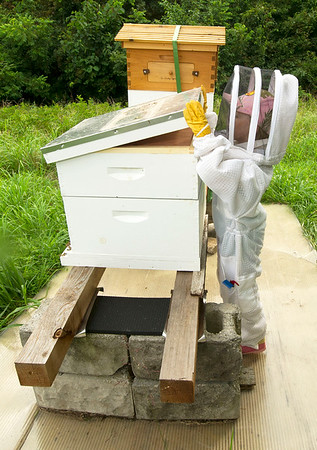 Six-year-old Lila Cade checks one of her hives at her rural Carthage home on Wednesday night.<br /> Globe | Laurie Sisk