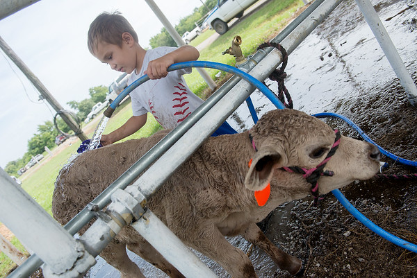 Globe/Roger Nomer<br /> River Franks, 5, Goodman, washes his baby heifer on Wednesday at the Newton County Fair.