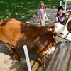 "Eleven-year-old Lauren Page washes her cow, ""Janet"" as friend Alyssa Williams, 11, looks on Wednesday at the Jasper County Fair in Carthage. Both girls are members of the Pleasant Valley 4H Club.<br /> Globe 