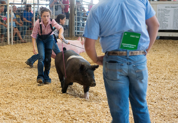 Globe/Roger Nomer<br /> Karli Buggs, 12, Sarcoxie, keeps an eye on the judge as she competes in the Round Robin Showmanship competition on Saturday at the Jasper County Youth Fair.