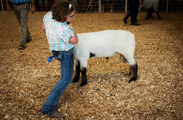 Globe/Roger Nomer<br /> Caitlyn Garrett, 11, Joplin, braces herself as she shows her ram on Thursday at the Jasper County Youth Fair in Carthage.