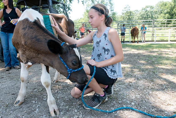 Globe/Roger Nomer<br /> Isabella Kramer, 11, Carthage, brushes her calf Mr. Goat on Thursday at the Jasper County Youth Fair in Carthage.