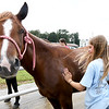 "Eleven-year-old Maelyn Wright, of Neosho, washes her pony quarter horse, ""Shasta,""  on the first day of the Newton County Fair on Wednesday in Neosho.<br /> Globe 