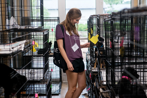 Globe/Roger Nomer<br /> Lauren Hull, St. Louis, greets dogs on Thursday while volunteering at the Joplin Humane Society.