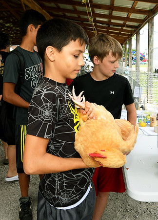Front to back: Tyler Campbell, 11, of Westfield, Ty Meyer, 11, of Seneca and Alex Campbell, 14, of Westfield wait to have their poultry checked on the first day of the Newton County Fair on Wednesday in Neosho.<br /> Globe | Laurie Sisk