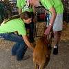 From the left: 4-Hers Dusti Henderson, of the Spring Valley Sparklers 4-H Club and Mya Hamilton, of the Shamrock 4-H Club, on Wednesday night, introduce Class LTD client Terry Chance, of Frontenac, to the goat they will show as part of Herding Heroes at the Cherokee County Fair in Columbus, Kan.<br /> Globe | Laurie SIsk