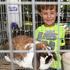 Six-year-old Jase Bard, of Seneca, checks out the rabbits on the first day of the Newton County Fair on Wednesday in Neosho.<br /> Globe | Laurie Sisk