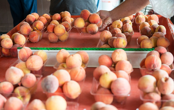 Globe/Roger Nomer<br /> Customers select peaches at Murphy Orchard on Wednesday afternoon.