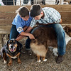 Wyatt Alexander, 10, Baxter Springs, with dog Raven, left, and Mike Shepard, 13, Columbus, with dog Lily, wait for their turn at the Cherokee County Fair in Columbus on Tuesday.<br /> Globe | Roger Nomer