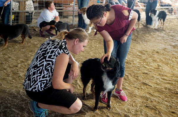 Trinity Adoremos, 10, Crestline, shows her dog Willie to Jennifer Barber for judging at the Cherokee County Fair on Tuesday in Columbus.<br /> Globe   Roger Nomer