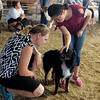 Trinity Adoremos, 10, Crestline, shows her dog Willie to Jennifer Barber for judging at the Cherokee County Fair on Tuesday in Columbus.<br /> Globe | Roger Nomer