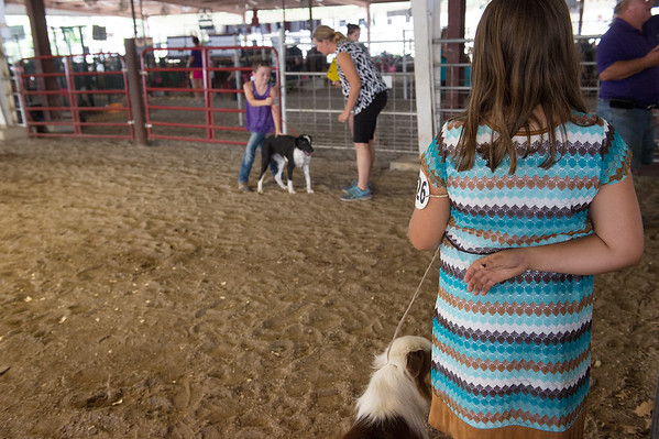 Airauana Sharp, 9, Baxter Springs, and her dog Cowgirl wait for judging at the Cherokee County Fair on Tuesday in Columbus.<br /> Globe   Roger Nomer