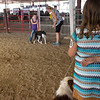 Airauana Sharp, 9, Baxter Springs, and her dog Cowgirl wait for judging at the Cherokee County Fair on Tuesday in Columbus.<br /> Globe | Roger Nomer