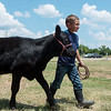 River Franks, 7, Goodman, leads his calf KC to a bath on Wednesday at the Newton County Fair.<br /> Globe | Roger Nomer