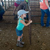 Ella Hensley, 4, Jasper, helps with pen assembly on Monday in Carthage in preparation for the Jasper County Youth Fair.<br /> Globe | Roger Nomer