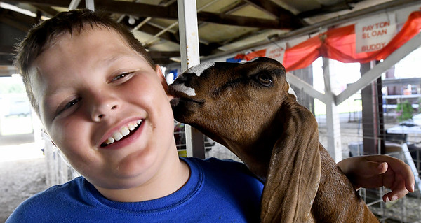 A goat nips at the earlobe of 10-year-old Payton Sloan, of Seneca, as Sloan was raking pens in the goat barn on Thursday at the Newton County Fair.<br /> Globe | Laurie Sisk