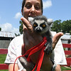 "Tonya Carrillo holds ""Ringo,"" a four-week old ring tailed lemur at the Steal Your Hearts Exotics & Petting Zoo last week south of Joplin.<br /> Globe 