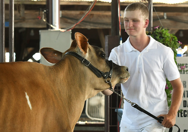 """Eli Giebler, 15, tries to coax his two-year-old cow """"Love"""" during the showmanship competition on Thursday at the Newton County Fair in Neosho.<br /> Globe 