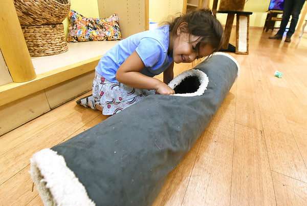 Four-year-old Charlotte Jimenez tries to caox a kitten out of a furry tunnel at the Tiny Tigers Lounge and Adoption Center in Northpark Mall on Saturday. The cat lounge will remain open an additional weekend untill Sunday, August 4 at the mall. Hours are Friday & Saturday noon to 7pm and Sunday noon to 6pm.<br /> Globe | Laurie Sisk