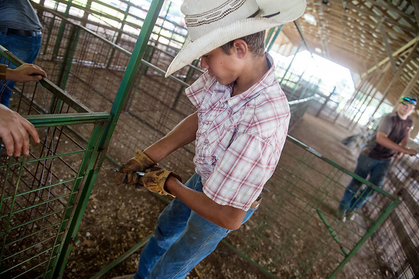 Wyatt Cowyer, 14, Jasper, helps assemble a pen on Monday in Carthage in preparation for the Jasper County Youth Fair.<br /> Globe | Roger Nomer