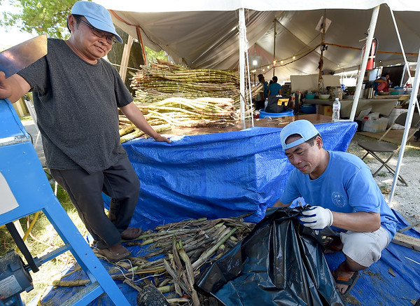 From the left: Canh and Hieu Nguyen, of Raleigh. N.C. on Tuesday prep bundles of sugar cane in preparation for guests at Marian Days, which opens Thursday at Carthage's Congregation of the Mother of the Redeemer.<br /> Globe | Laurie Sisk