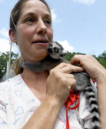 """""""Ringo,"""" a four-week-old ring tailed lemur,  hugs Tonya Carrillo's's neck last week at the Steal Your Hearts Exotics & Petting Zoo south of Joplin.<br /> Globe 
